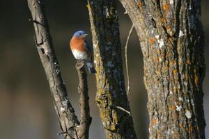 Blue bird by river