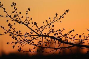 Tree Limbs at Sunset