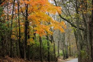 Vibrant Fall Scene in Kentucky