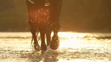 CLOSE UP: Detail of water drops sprinkling while big horse walking in the river video