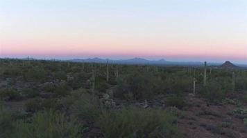 AERIAL: Big cactuses in amazing Arizona landscape before sunrise