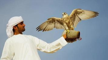 Retrato de halcón peregrino equilibrado árabe propietarios guante