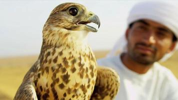 Close Up Arabic Male Displaying Trained Falcon