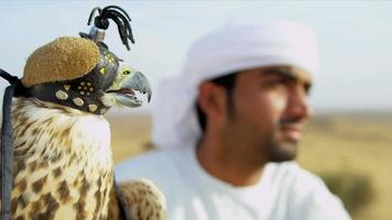 Male Arab Displaying Trained Falcon Desert Location