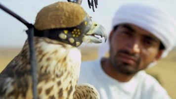 Portrait Peregrine Falcon Balanced Arabic Male Owners Glove