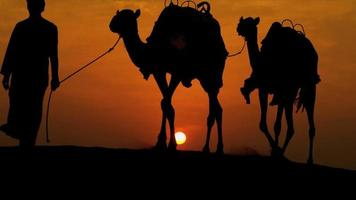 Camels Led Desert Sand Arab Male Sunset