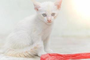 Close-up shot of a white kitten