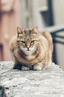Tabby cat on concrete railing