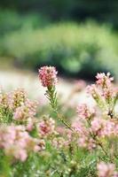 flores de color rosa en el jardín