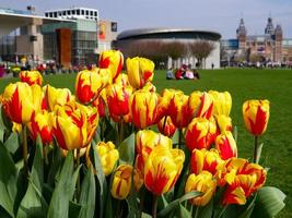 Amsterdam, Netherlands, 2020 - Yellow and red tulips in front of a museum