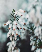 primer plano, de, flores blancas
