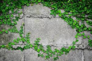 Bright green leaves on a wall