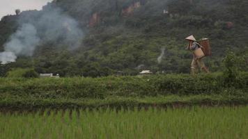 Vietnamese farmer woman carrying heavy basket in Sapa Mai Chau Vietnam video