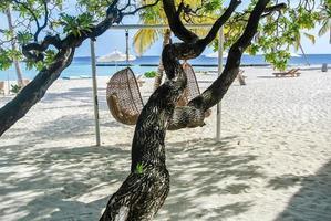 amazing tree on the beach