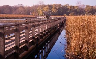 Marsh photo