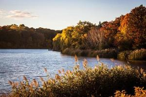 Sunny Pond in Autumn photo
