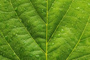 waterdrops on a leaf background