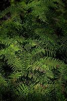 Green ferns in a forest