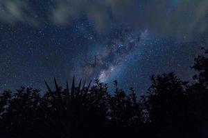 Silhouette of trees against the night sky photo