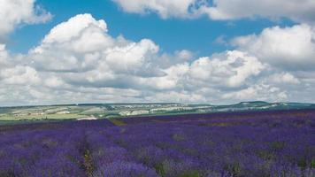 Clouds over a big field of the blossoming lavender