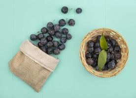 top view of the small dark globose astringent fruit sloes on a bucket with sloes falling out of a burlap bag on a blue background photo