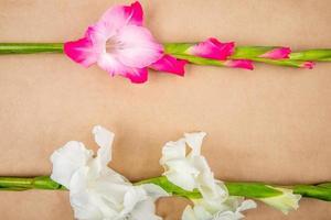 Vista superior de flores de gladiolo de color rosa