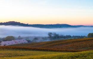 australia, 2020 - niebla sobre un campo de hierba
