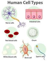 Information poster on human cells vector