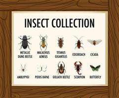 Set of insect collection banner on wooden table vector