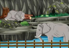 escena con dos elefantes en el zoológico.
