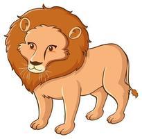 Wild lion on white background