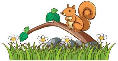 Isolated picture of squirrel in garden vector
