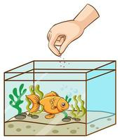 Hand feeding goldfish in the tank vector