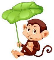 Lindo mono sosteniendo una hoja sobre fondo blanco.
