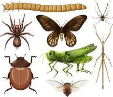 colección de diferentes insectos. vector