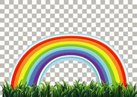 hierba y arcoiris vector