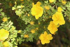 primer plano de flores amarillas