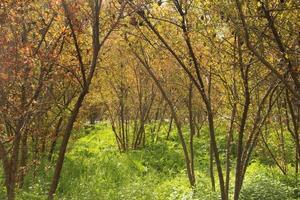 arboles y pasto verde
