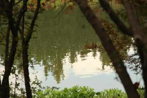 Reflection of trees in a pond
