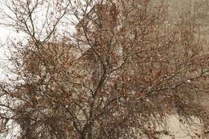 Snow falling on a tree