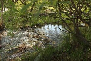 Stream running through the woods