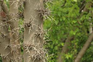 Thorns on a tree