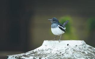 pájaro blanco y negro en el tocón de un árbol