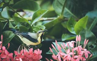 Yellow and black bird on flowers