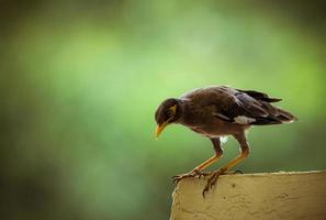Brown bird perched on railing photo