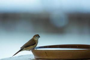 Bird perched on a bowl of water