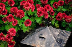 red chrysanthemum flowers and cross
