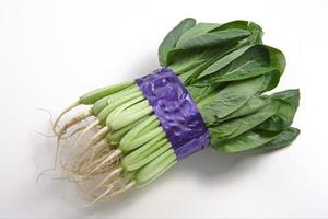 Brassica campestris