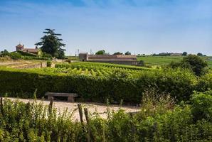 Vineyards in St. Emilion, France