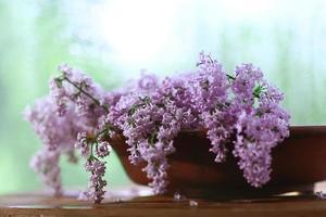 lilac flowers macro background photo